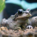 街で見つけたカエル商品。カエルの生ゴミ防虫剤。そして株式会社ウエ・ルコというカエル的に注目の企業