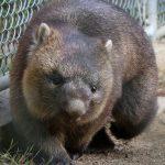 【お出かけ】五月山動物園行ってきた。写真40枚。