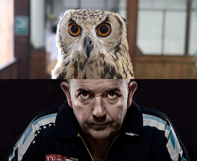 phil-taylor-horned-owl2