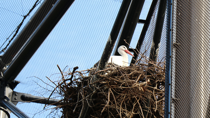天王寺動物園 鳥の楽園