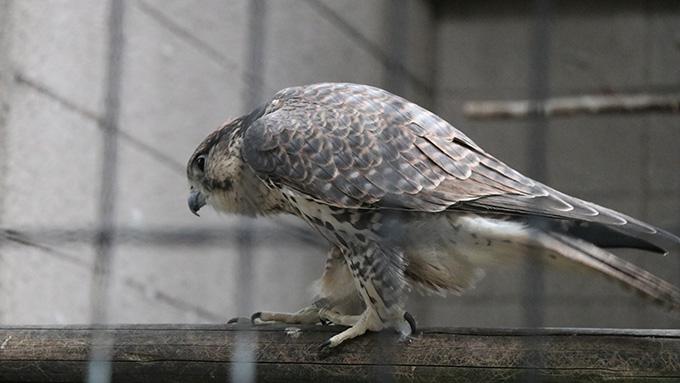 tennoji-zoo-6365