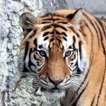 【お出かけ】大阪随一の動物園、大阪市天王寺動物園に行ってきたレポ。写真60枚