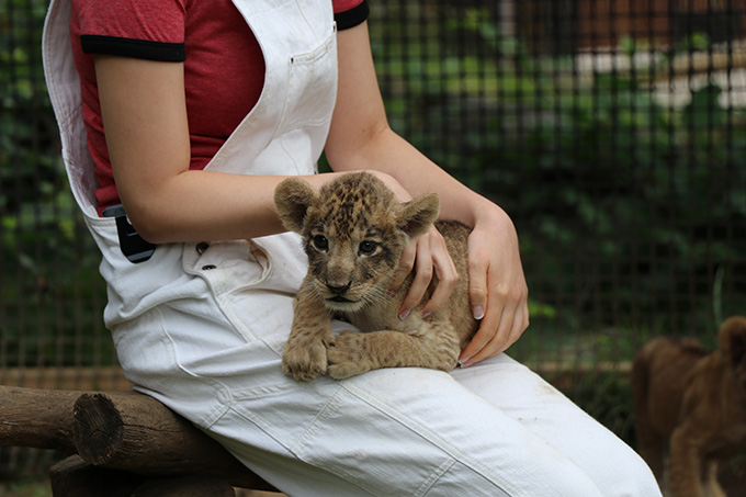 最初に見に来た時のライオンの赤ちゃん
